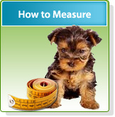 How To Measure and Put on Dog Shoes